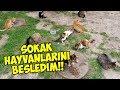 Download Lagu SOKAK HAYVANLARINI BESLEDİM || Bölüm #2 Mp3 Free