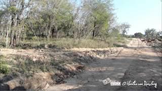 Leopard pounces, killing on camera