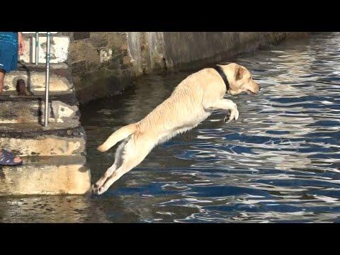 Esta Cadela adora o Mar | This Dog loves the Sea | Terceira Island Azores