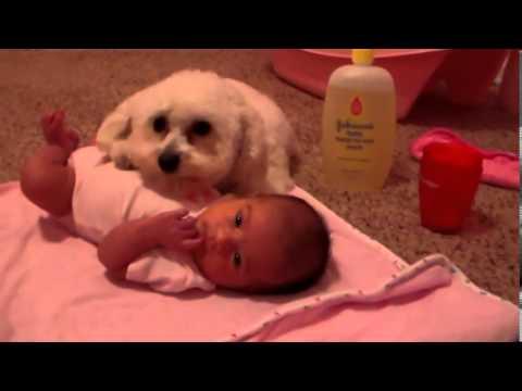 Bebeği Elektrikli Süpürgeden Koruyan Köpek