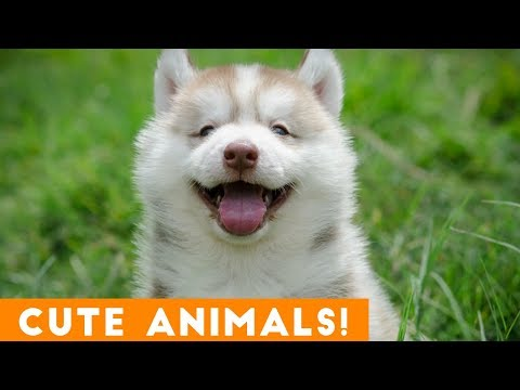 Funny animals - Cutest Pets & Animals of the Week Compilation November 2018  Funny Pet Videos