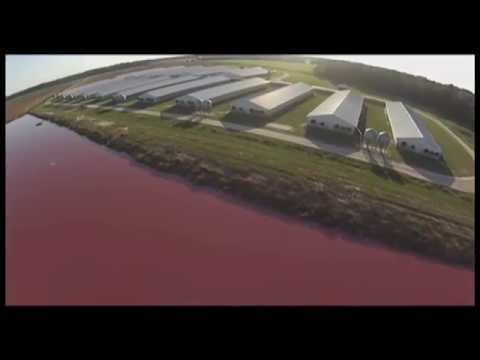 Spy Drones Expose Smithfield Foods Factory Farms spraying liquid waste into the air