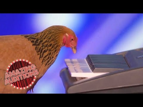 America's Got Talent 2017 -  Funniest / Weirdest / Worst Auditions - Part 1