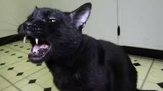 Talking Kitty Cat 44 - BAD! BAD! BAD!