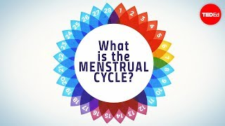 How Menstruation Works