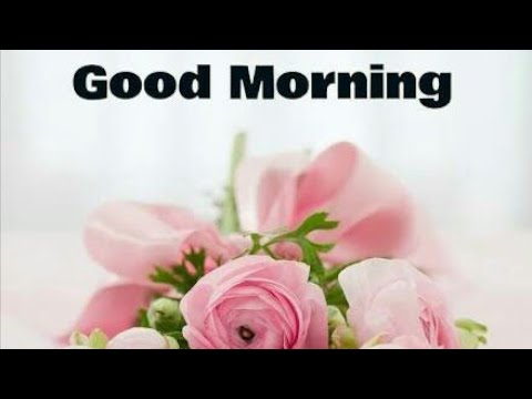Positive quotes - Good morning Wishes  WhatsApp Video Message  good thought  positive quote  creativity 4 all