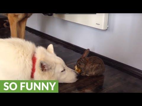 il-coniglio-che-condivide-la-merenda