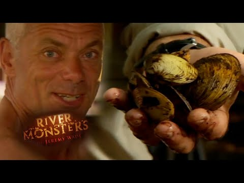 Cooking Clams In Remote Solomon Islands | SPECIAL EPISODE! | River Monsters