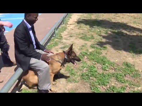 Video Hermiona K9 manof personal protection knife attack protection kenya download in MP3, 3GP, MP4, WEBM, AVI, FLV January 2017