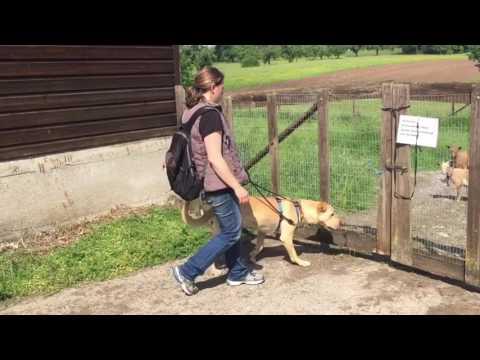 Hundeführerschein Kosten Cuxhaven