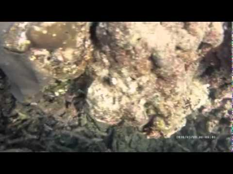 Fish hide and seek Scuba Diving Sri Lanka
