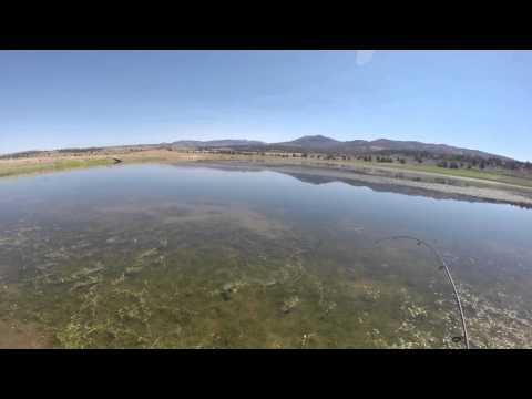 Bass Fishing in a farm pond in Alturas, CA