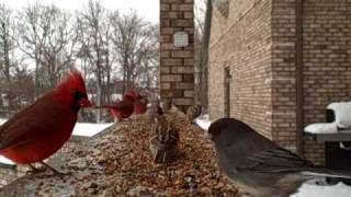 Winter Birds - Entertainment For Cats 9242349 YouTube-Mix