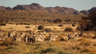 African Safari Animals In Namibia