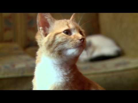 Video Stray Cat Hostelsta