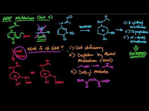 APAP Metabolism part 2