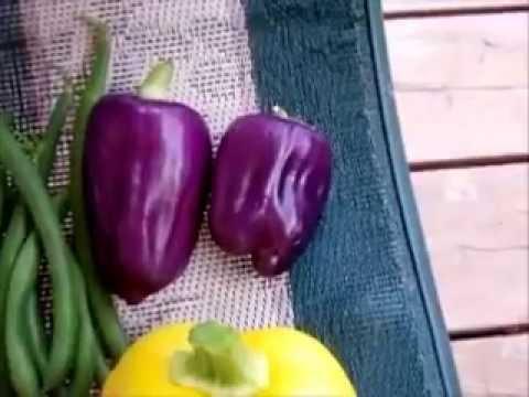 Ideas To Grow A Garden The Organic Way