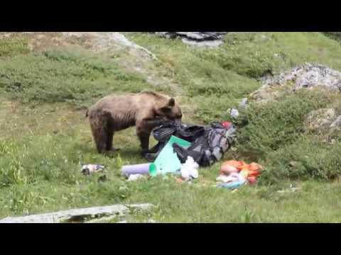Как нас медведь гонял, а мы – медведя
