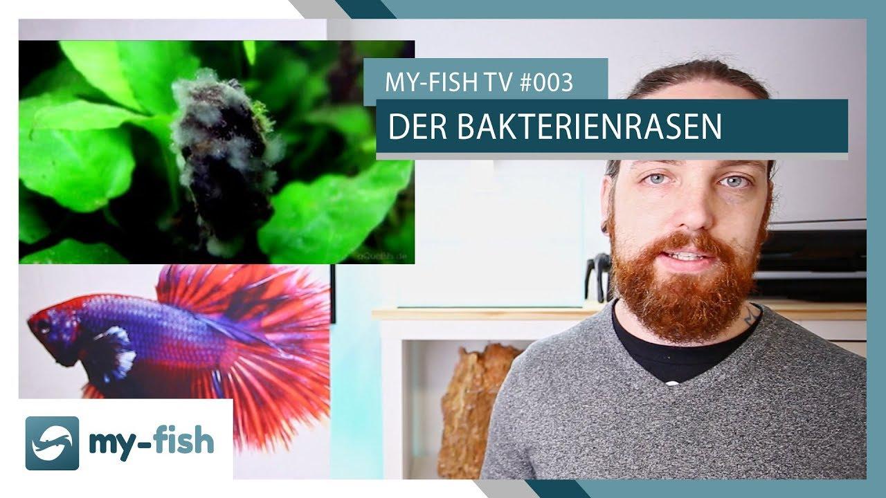 my-fish TV - Deine Nr. 1 Anlaufstelle für alle Themen rund um die Aquaristik 61