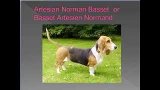 dog breed names cross-reference part 1 - A