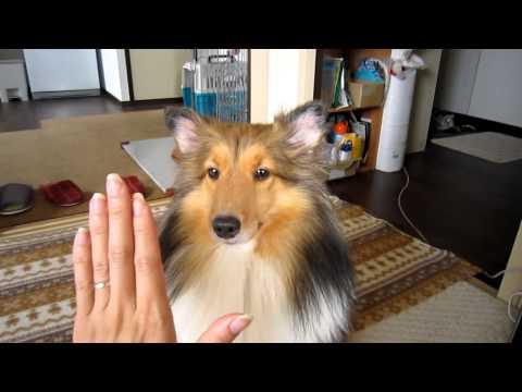 主人把手伸出來放在狗狗的眼前,下一秒牠超可愛的回應讓主人愛死牠了!