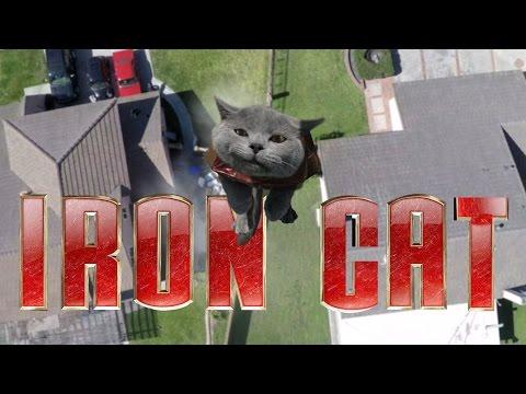 iron man nella visione di un gatto