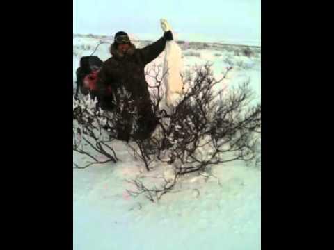 ловля зайца петлей зайца видео