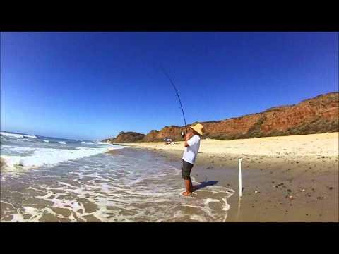 Surf Fishing, CA – Biggest Corbina I have ever seen