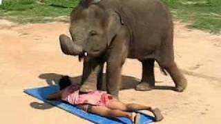 Thai Elephant Massage - Crazy!