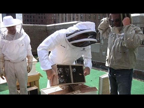 Waldorf Astoria Makes Own Honey, Bees Move In