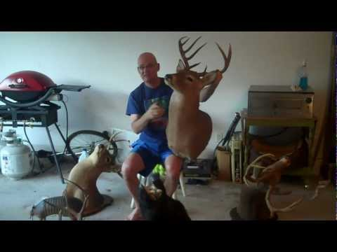 How to Make Money from Garage Sale Finds Taxidermy Roarman