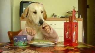 Собаки с руками  — видеонарезка