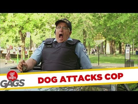 Dog Attacks Cop - Youtube