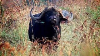 Vryheid South Africa  City pictures : Bivane Game Lodge - Game Lodge Accommodation Vryheid South Africa - Africa Travel Channel