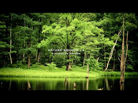 Sound - Nature Sound 16 - THE MOST RELAXING SOUNDS - over an hour nature sound. This is relaxing nature sound. This is relax sound you can absolutely relax from this...