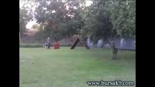 Profesyonel Köpek Eğitimi 3 videosunun kapak resmi