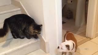 Приколы с котами. ТОПовая подборка!