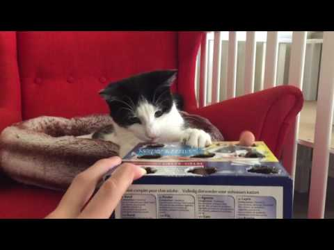 Cat Plays WhackaFinger