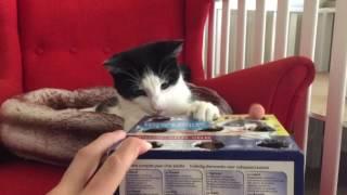 Pudełko, kot i ręką wystarczą do świetnej zabawy