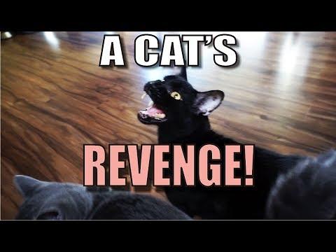 Talking Kitty Cat 55 -  A Cat's Revenge (видео)