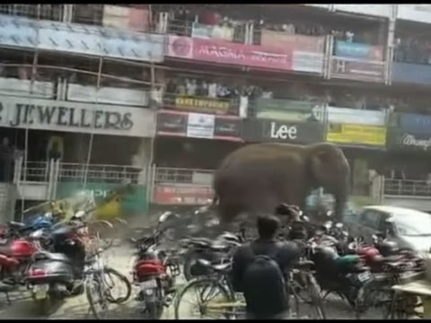 WATCH: Wild elephant on rampage in Indian town