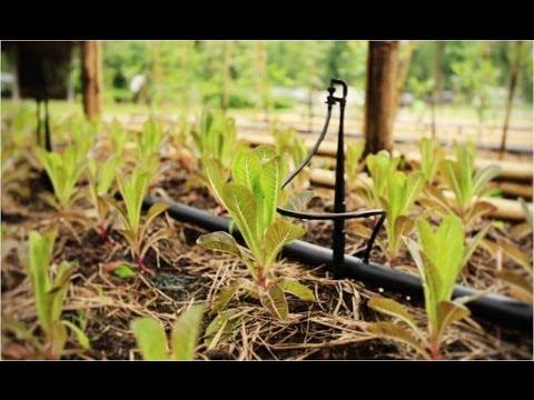เกษตรอินทรีย์ เกษตร