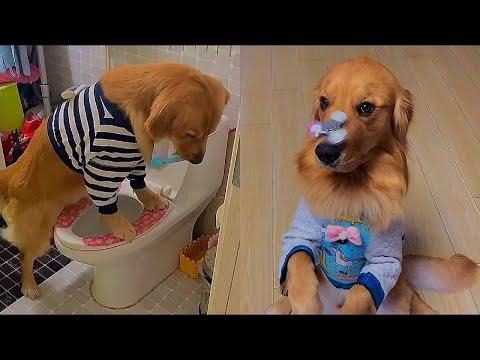 Top 10 Smartest Dog Breeds 2012