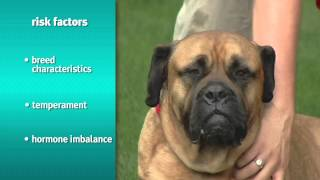Risks And Signs Of Pet Obesity