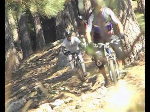 Blue bear: Downhill Mountain biking