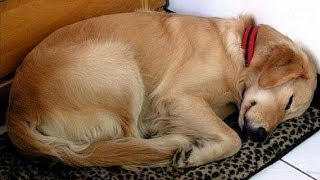 Video Strange Dog Keeps Coming To Nap At Her House.Then She Finds This Note On His Collar MP3, 3GP, MP4, WEBM, AVI, FLV Oktober 2018