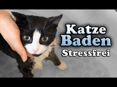 Katzen: Wie bade ich meine Katze? (Stressfrei)