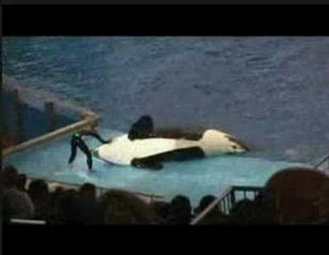 鯨魚曰:我不是故意的,誰叫你不給我吃的!