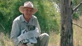 Koala Heat Wave on Catalyst