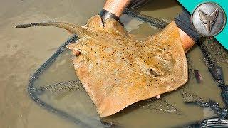 Crazy Stingray Catch! by Brave Wilderness
